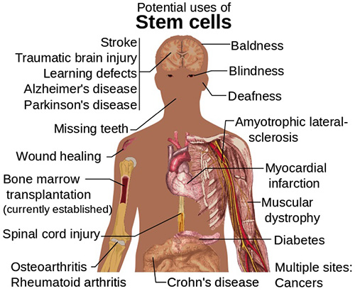 all-stem-cell-uses